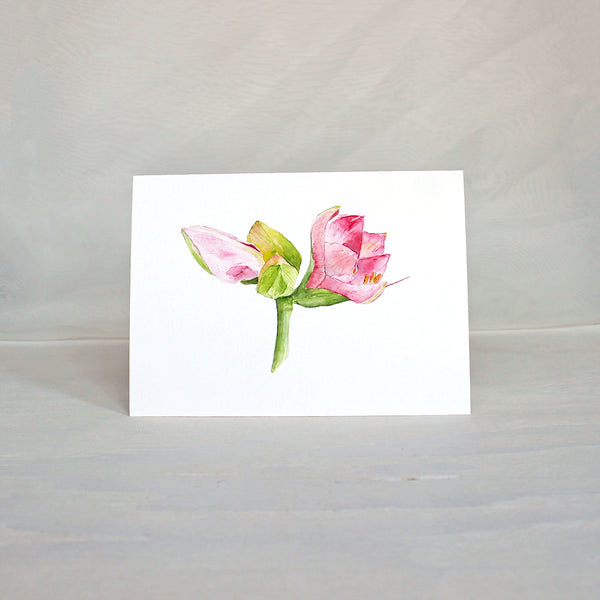 Pink amaryllis flower featured on a note card. Watercolor painting by Kathleen Maunder