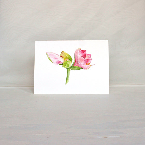 Note card featuring a watercolor painting of pink amaryllis flower and buds. Artist Kathleen Maunder.