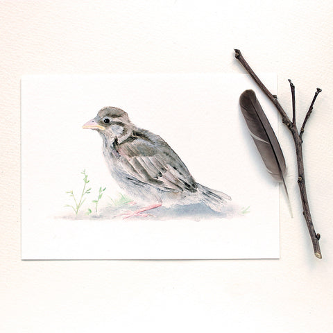 Baby sparrow watercolor print by Kathleen Maunder, trowelandpaintbrush