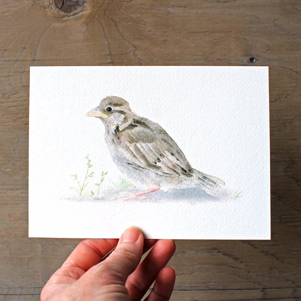 Sparrow art print by Kathleen Maunder, trowelandpaintbrush