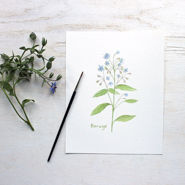Borage print - Botanical watercolor painting by Kathleen Maunder