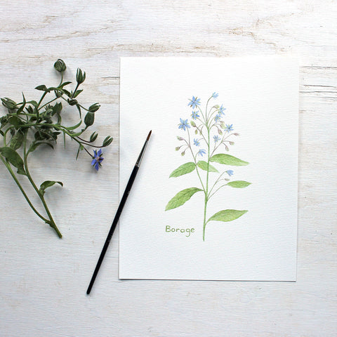 Edible Flower Watercolor Print - Borage