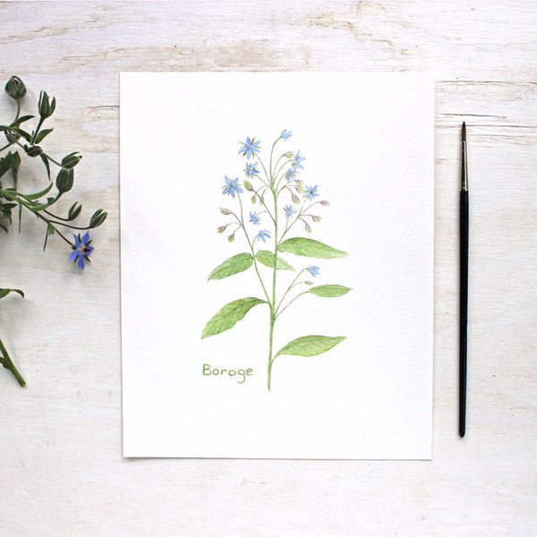 Borage print | Watercolor painting by Kathleen Maunder of Trowel and Paintbrush