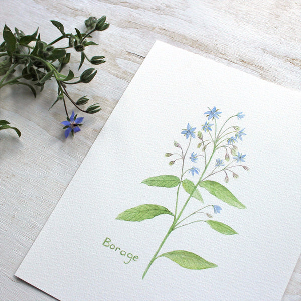 Borage watercolour print by Kathleen Maunder of Trowel and Paintbrush