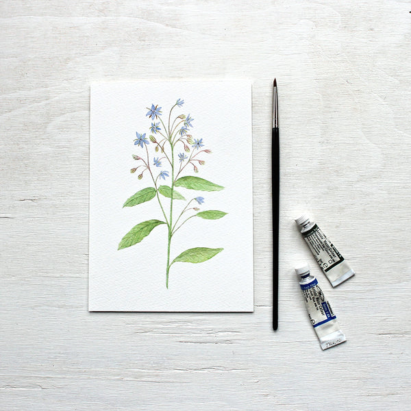 Borage watercolour print by artist Kathleen Maunder