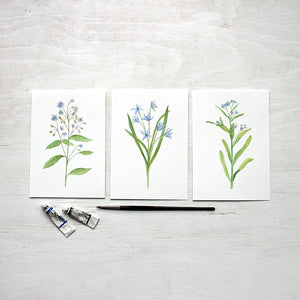Blue botanical watercolor prints - Borage, Scilla and Forget-me-nots by artist Kathleen Maunder