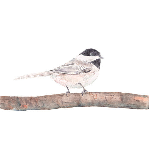 Chickadee watercolor print by Kathleen Maunder