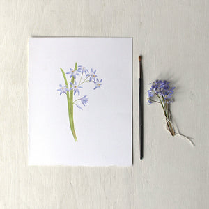 An art print featuring a watercolor painting of blue chionodoxa or glory-of-the-snow by artist Kathleen Maunder.