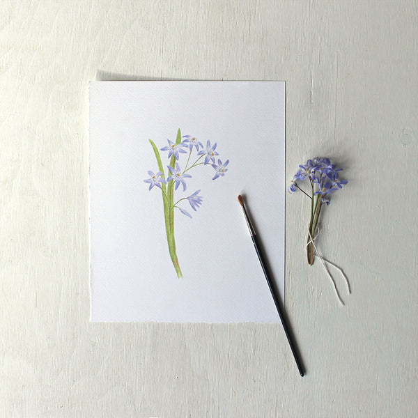 An art print featuring a watercolour painting of blue chionodoxa or glory-of-the-snow. Artist Kathleen Maunder.