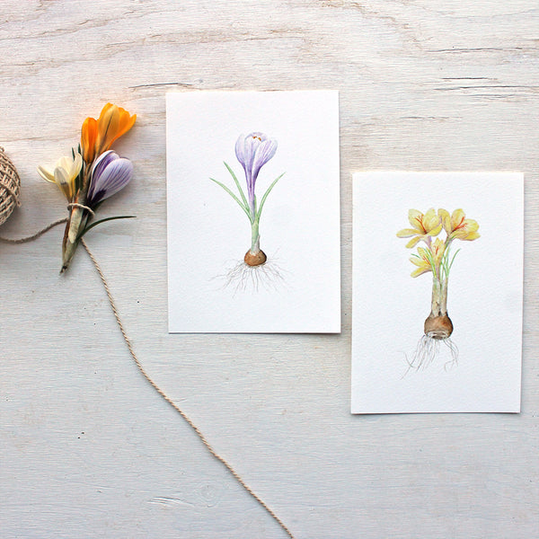 Watercolor images of crocuses by artist Kathleen Maunder (trowelandpaintbrush)