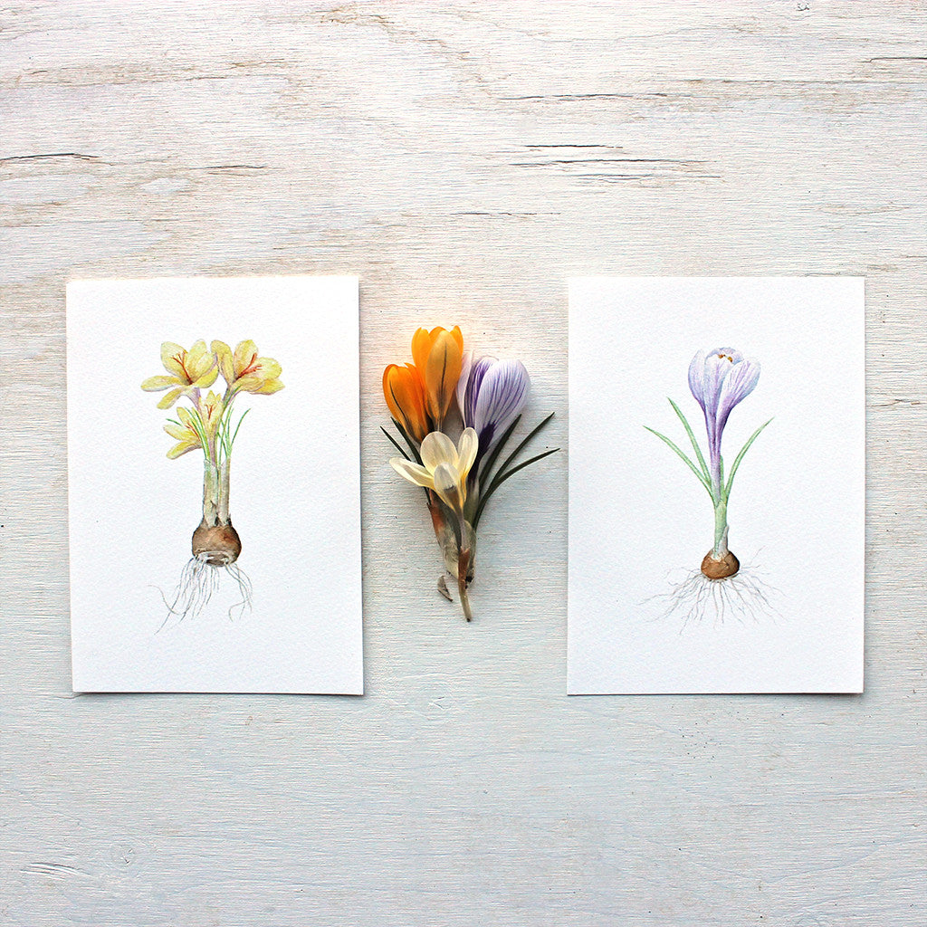 Botanical watercolor prints of crocuses by artist Kathleen Maunder