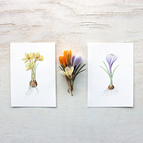 Crocus Watercolor Print Set