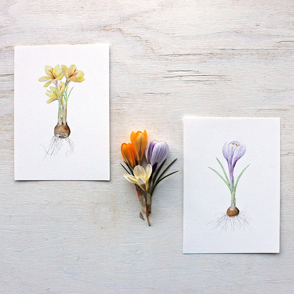Beautiful crocus prints by watercolor artist Kathleen Maunder