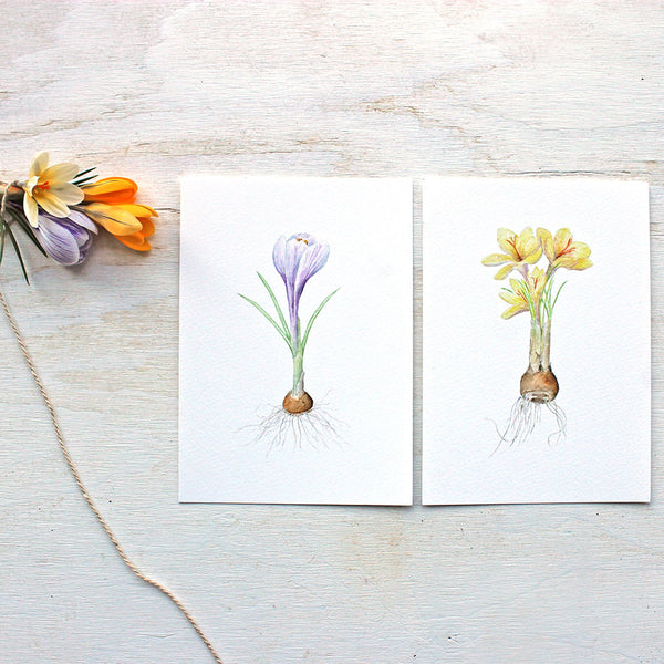 Crocus watercolour print set by Kathleen Maunder, trowelandpaintbrush.com