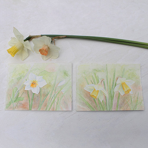 Daffodil Watercolor Painting - Narcissus