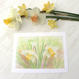 Print featuring a watercolour painting of daffodils by Kathleen Maunder