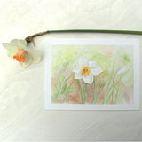 Print featuring a watercolor painting of a single daffodil by Kathleen Maunder