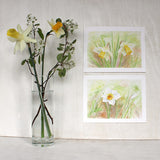 Botanical paintings of daffodils by artist Kathleen Maunder