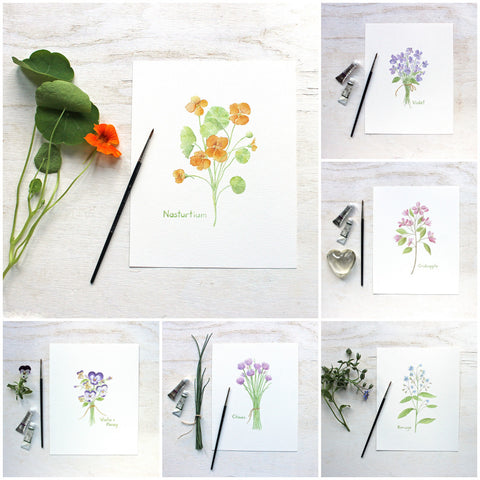 Edible Flowers - Six botanical prints by Kathleen Maunder