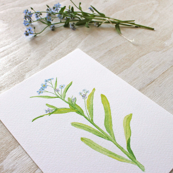 Forget-me-not print by watercolour artist Kathleen Maunder