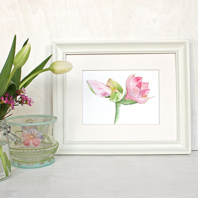 Pink amaryllis print based on watercolor painting by Kathleen Maunder