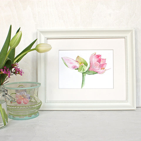 Pink Amaryllis Watercolor Print