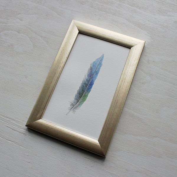 Framed original watercolour painting of a parrot feather by Kathleen Maunder