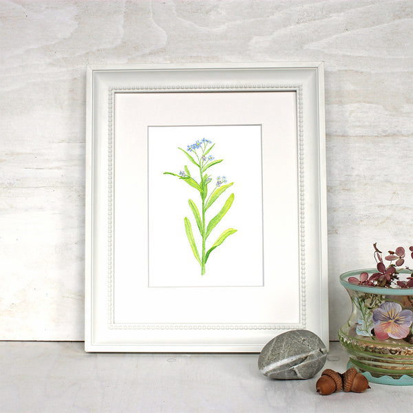 Framed forget-me-not print by artist Kathleen Maunder, trowelandpaintbrush