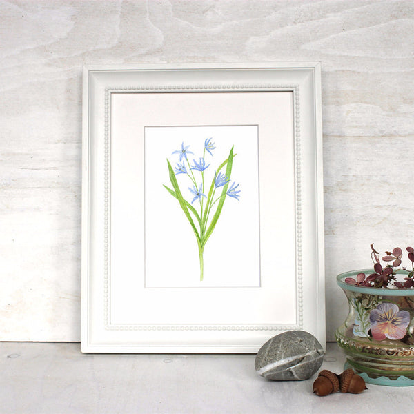 Blue Flowers - Scilla Print