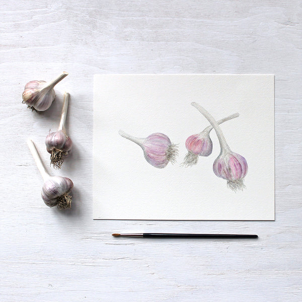 Purple stripe garlic bulbs - art print based on watercolour by Kathleen Maunder