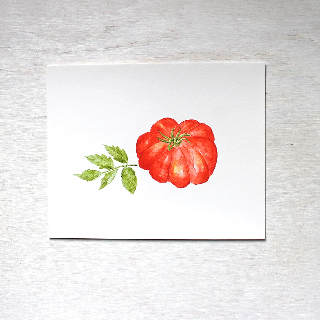 A red Costoluto Fiorentino tomato painted in watercolor by artist Kathleen Maunder. Available as a print.