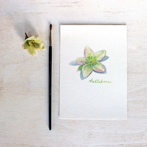 Hellebore Watercolor Print