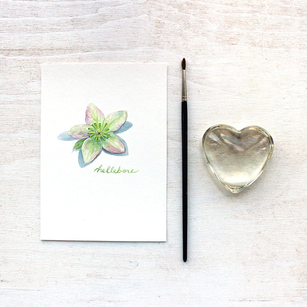 Hellebore art print featuring a botanical watercolor painting by Kathleen Maunder