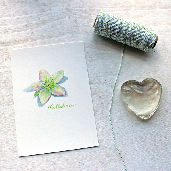 Hellebore watercolour painting by artist Kathleen Maunder available as 5 x 7 inch print.