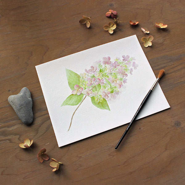 Hydrangea watercolor (print) by artist Kathleen Maunder, Trowel and Paintbrush