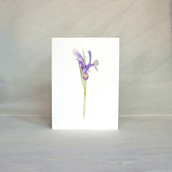 Note card featuring watercolor painting of a Siberian iris. Artist Kathleen Maunder.