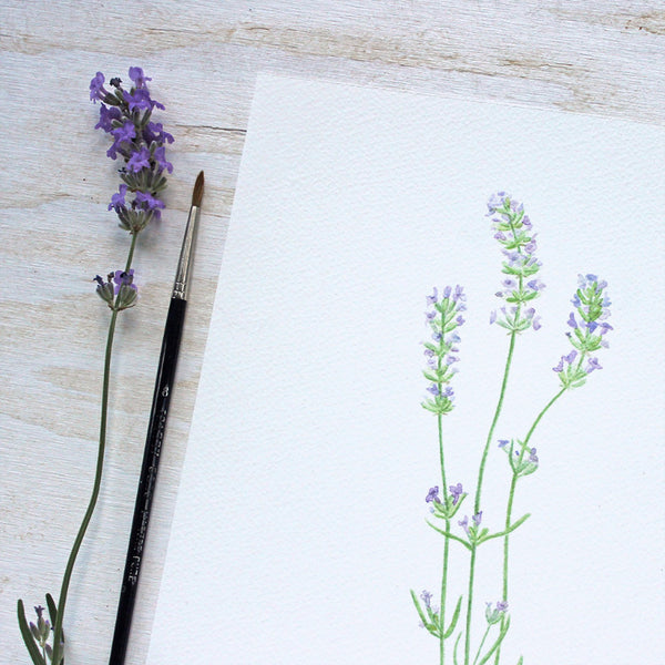 Lavender watercolor print by Kathleen Maunder, Trowel and Paintbrush