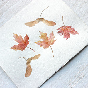 Autumn watercolor of maple leaves and keys by Kathleen Maunder