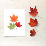Maples leaves watercolor print by Kathleen Maunder, Trowel and Paintbrush