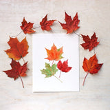 Maples leaf watercolour print by Kathleen Maunder, Trowel and Paintbrush