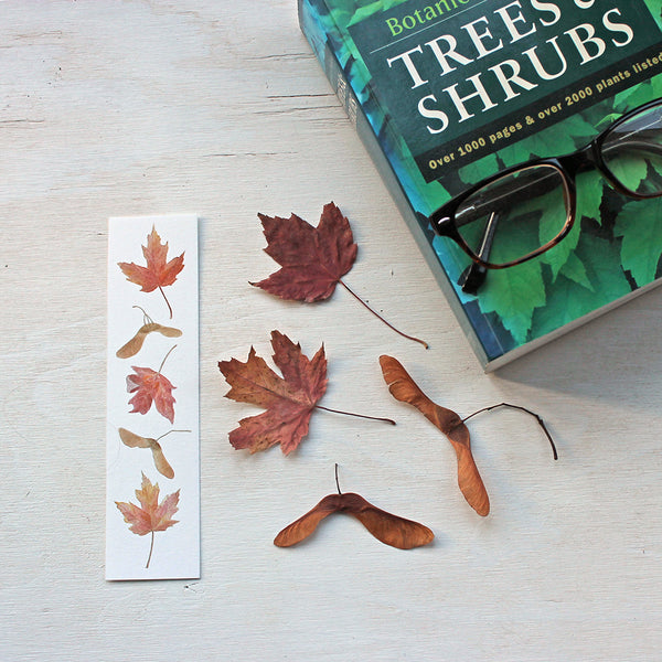 Bookmark featuring a watercolour painting of maples leaves and keys by artist Kathleen Maunder