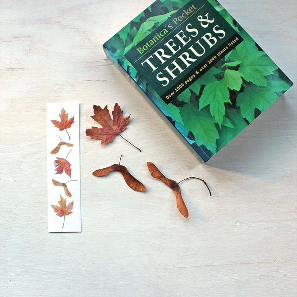 Bookmark featuring a painting of maples leaves and keys by watercolor artist Kathleen Maunder