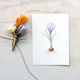 Striped purple crocus print by watercolor artist Kathleen Maunder (trowelandpaintbrush.com)