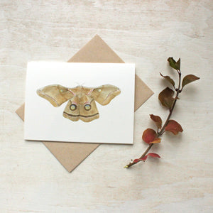 Note card set featuring a moth watercolor painting by Kathleen Maunder