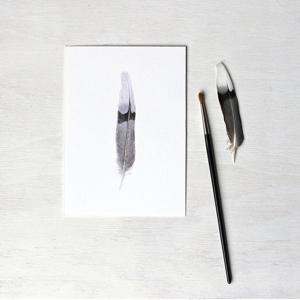 Print depicting an original watercolor painting of a mourning dove feather. Artist Kathleen Maunder.