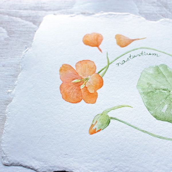 Detail of nasturtiums watercolor painting by artist Kathleen Maunder, Trowel and Paintbrush