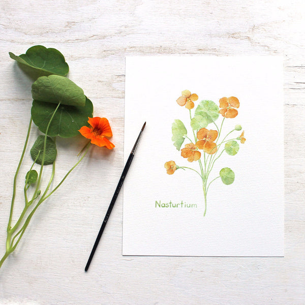 Nasturtium print - Botanical watercolor painting by Kathleen Maunder