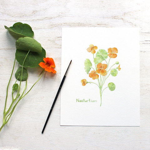 Edible Flower Watercolor Print - Nasturtium