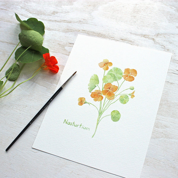 Nasturtium Watercolor Print by artist Kathleen Maunder of Trowel and Paintbrush