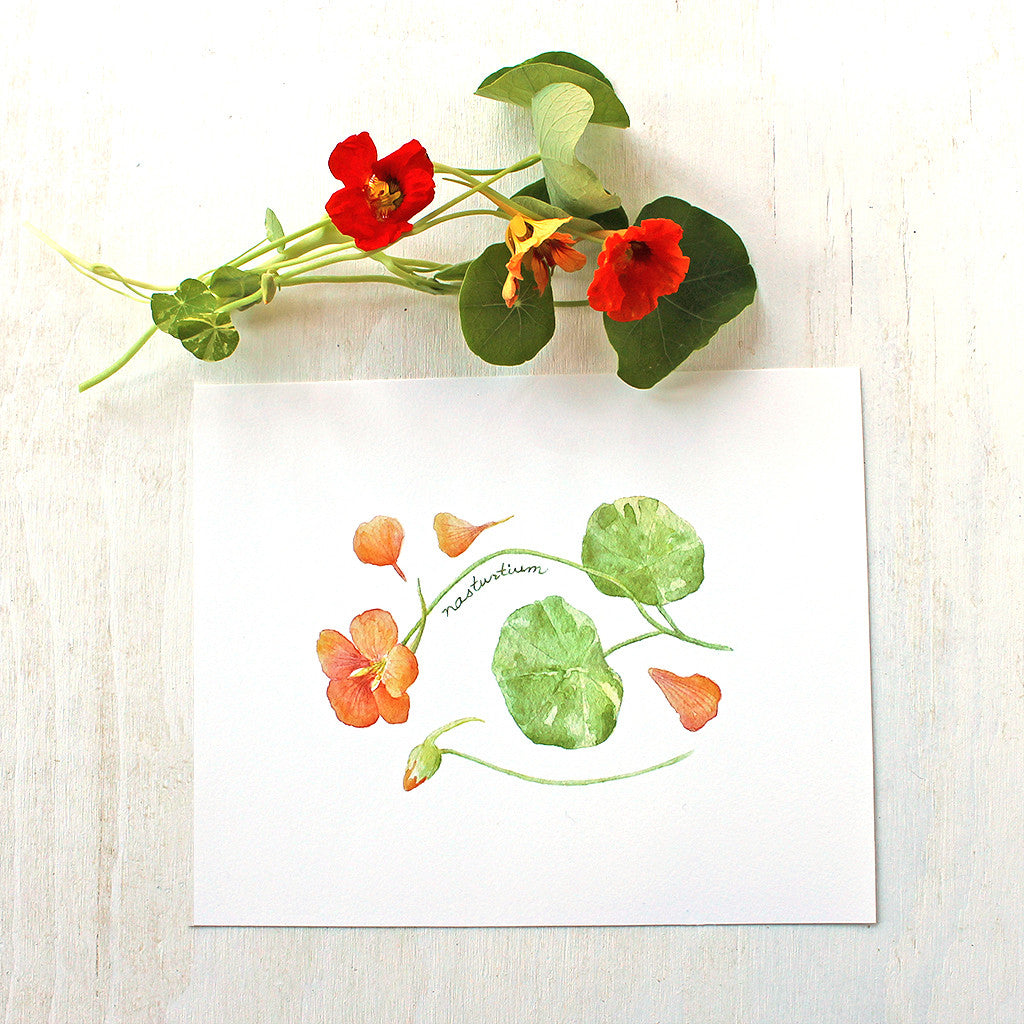 Nasturtiums watercolor print by Kathleen Maunder of Trowel and Paintbrush